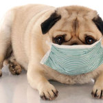 Your Pet and the Danger of Second Hand Smoke